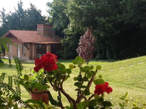 Un jardín fuera de Cabañas Dalga Inn