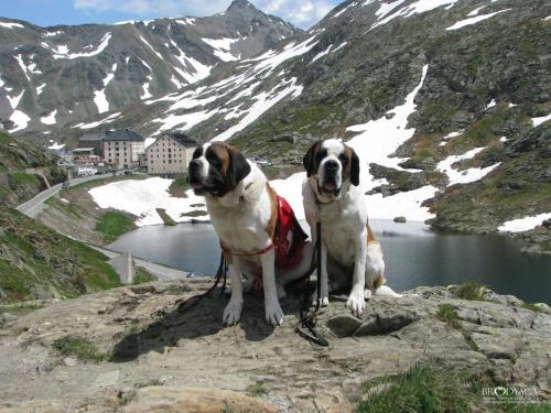 Pet or pets staying with guests at Hotel Restaurant du Crêt