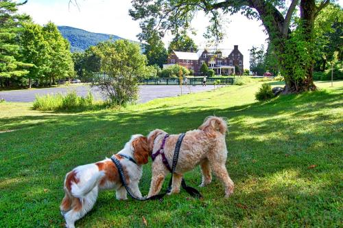 Pet or pets staying with guests at Wilburton Inn
