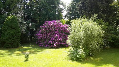 A garden outside Pension Wölfel