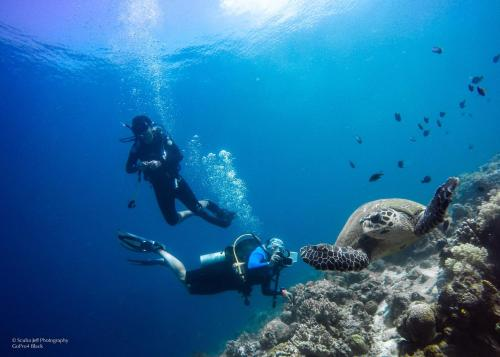 Snorkeling and/or diving at the guesthouse or nearby