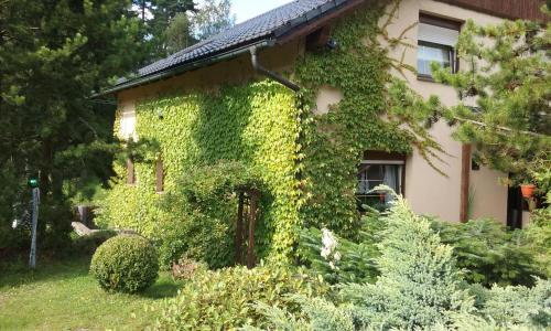 A garden outside Weineck