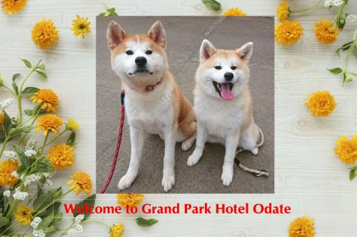 Pet or pets staying with guests at Grand Park Hotel Odate