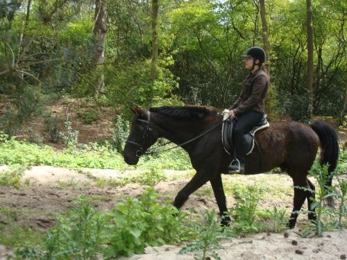 Équitation au sein de l'hôtel ou à proximité