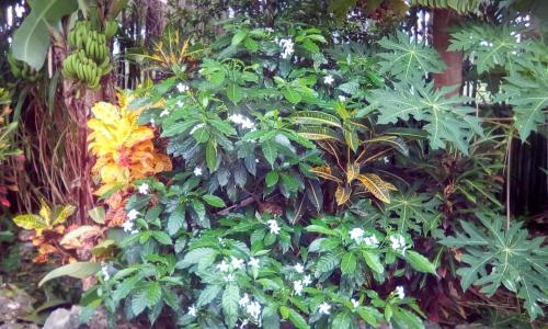 Ein Garten an der Unterkunft Simon House