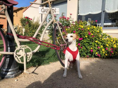 Mascotas con sus dueños en Amanecer en Campos