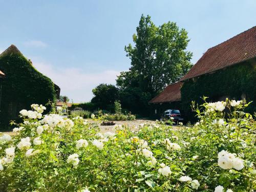 A garden outside La Ferme des Roses