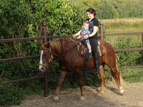 Катание на лошадях на территории гостевого дома или поблизости