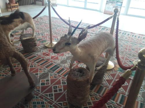 الحيوانات في الفندق أو بالجوار