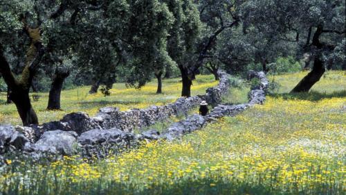 A garden outside Molino Rio Alajar