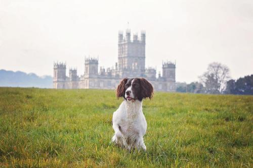 Pet or pets staying with guests at Bourne Valley Inn