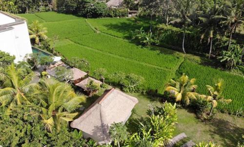 A bird's-eye view of Byasa Ubud