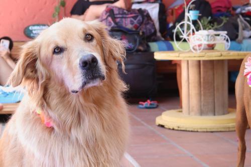 Pet or pets staying with guests at Hotel Casa de Verano Santa Fé