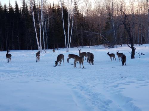 Deer Mountain Lodge & Wilderness Resort during the winter
