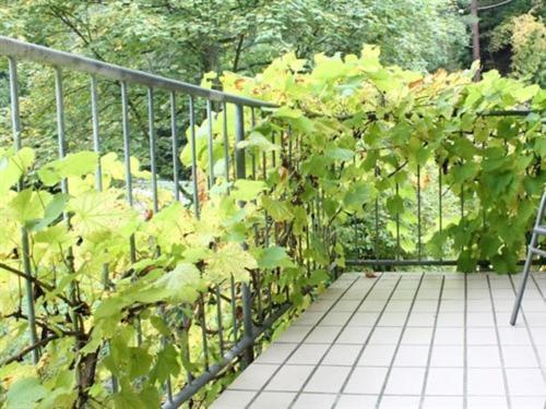 Een balkon of terras bij Hotel Winneburg