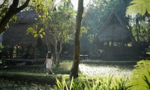 A garden outside Sapulidi Cafe, Gallery & Resort