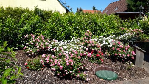 Ein Garten an der Unterkunft Fewo Kasch