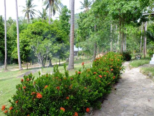 A garden outside Seashell Coconut Village Koh Tao