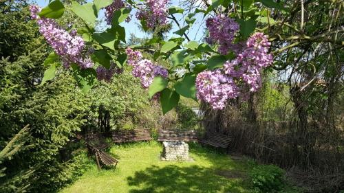 Ogród w obiekcie Willa Granit