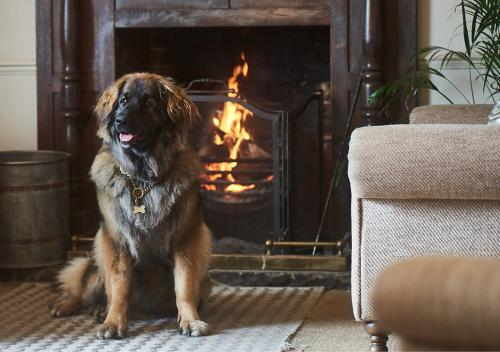 Pet or pets staying with guests at The Black Lion, Long Melford