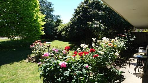 A garden outside Opal Motel