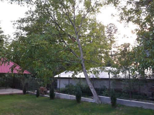O grădină în afara Casa Valea Morilor