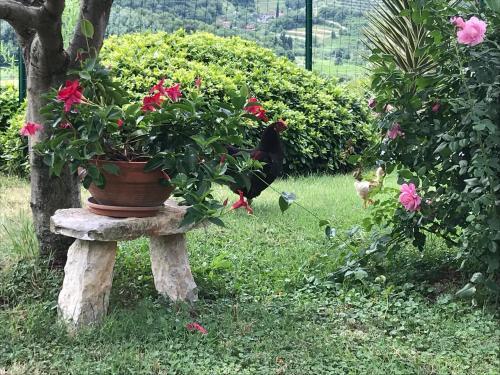 Vrt pred nastanitvijo Apartments Krt Mirko
