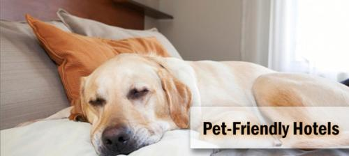 Pet or pets staying with guests at Hotel Delminium