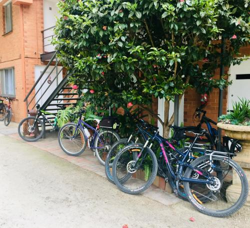 Biking at or in the surroundings of Warburton Motel