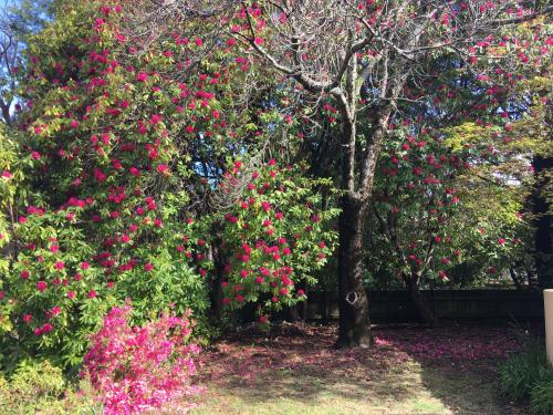 A garden outside Kookaburra Cottage