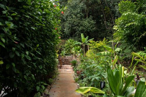 Um jardim em Haere Mai I Te Fare