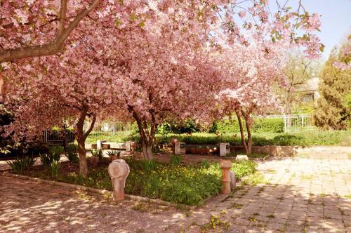 Сад в Гостиница Кузбасс