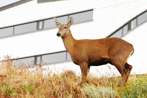 Animales en el lodge o alrededores