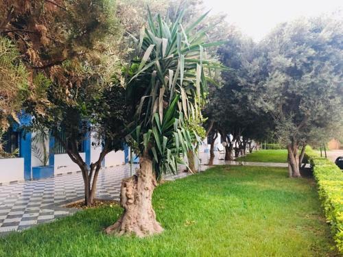 A garden outside Hotel Ribis