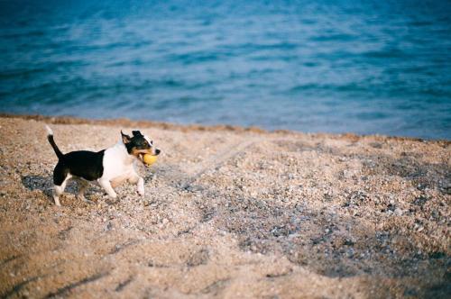 Huisdier of huisdieren van gasten bij Camping Sènia Caballo de Mar