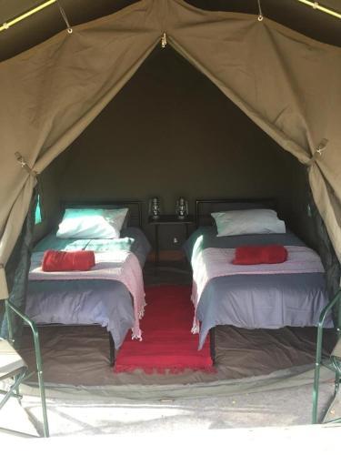 Madisa Bush Camp