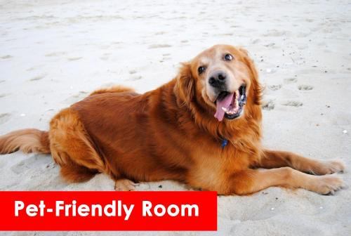 Pet or pets staying with guests at Fenwick Inn