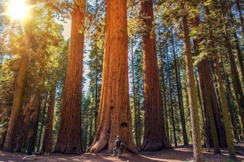 The Sequoia Hut!