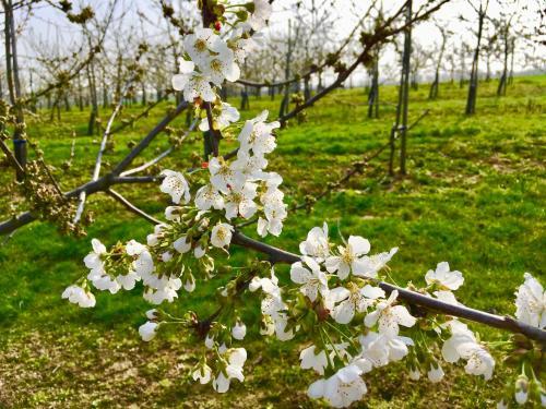 Een tuin van Helshovens wijnvat