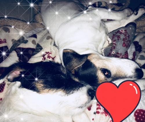 Pet or pets staying with guests at Locanda La Comacina