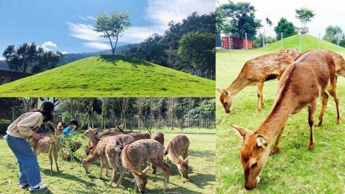 民宿或附近的動物