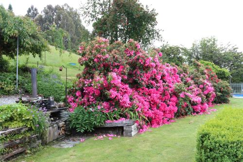 A garden outside Mountain View Lodge