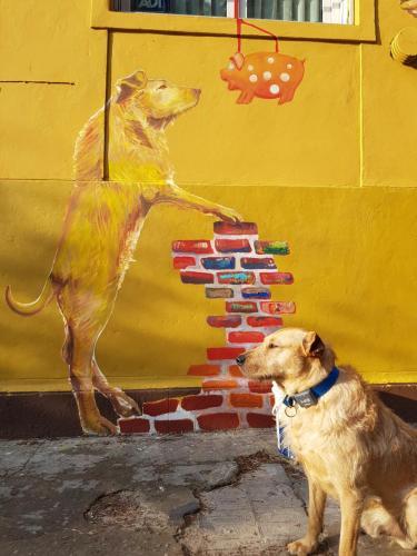 Pet ou pets ficando com hóspedes em Palermo Viejo Bed & Breakfast