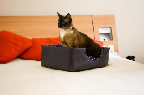 Pet or pets staying with guests at Novotel Porto Alegre Tres Figueiras