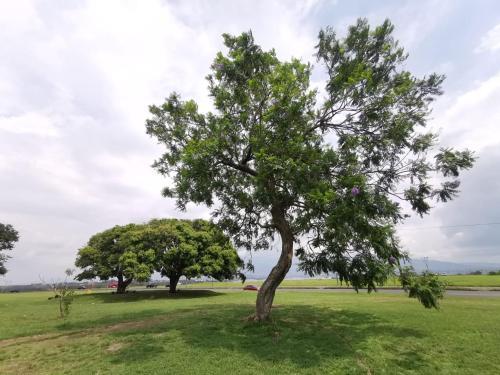 Jardín al aire libre en Toucan Hostel