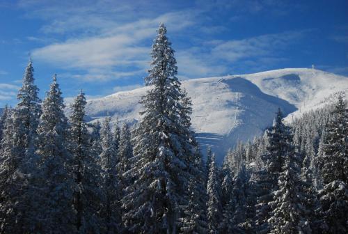 Zelena Dacha v zimě