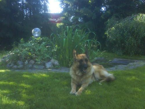 Pet or pets staying with guests at Pension Goerke