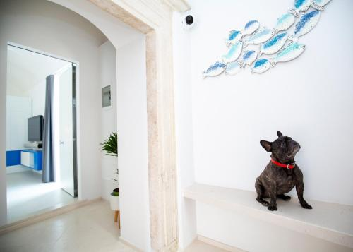 Pet or pets staying with guests at Al Castello Relais