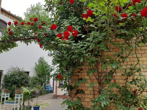 Fewo Rosenblüte am Stadtpark