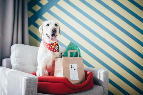 Pet or pets staying with guests at Colors Hotel Athens